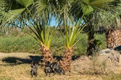 Dogs & Palms